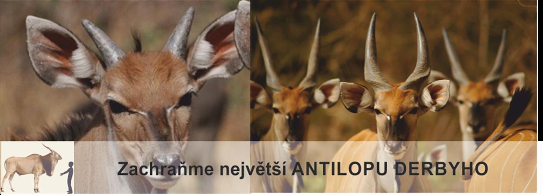 Zachraňme největší antilopu