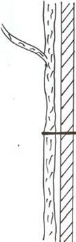 Šetrné uvázání kmínku vázací bužírkou