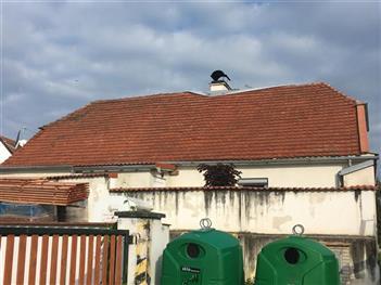 Rekonstrukce střechy - Dub u Prachatic